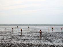 UNESCO-Weltnaturerbe Wattenmeer in Neuharlingersiel nahe Ferienhaus Kolks Huus